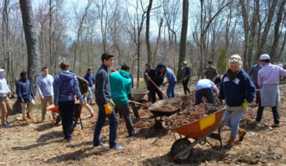 Westport Tree Board Offers Tree Seedling Giveaway