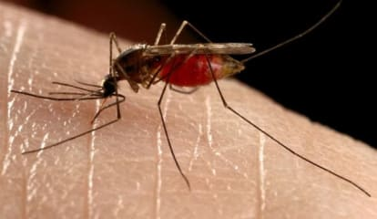 Pregnant Connecticut Woman Tests Positive For Zika Virus