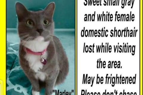 Owners Offer Reward For Mount Kisco Missing Cat