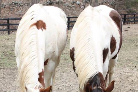 The Courtyard Farm Hosting Equine Rescue Fundraiser