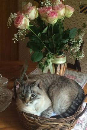 Owners Seek Missing Cat In Northern New Castle