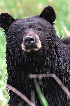 South Salem Man Reports Black Bear Sighting
