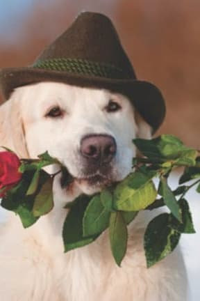 Share Love For Your Dog On Valentine's Day, Advises Wilton's Canine Company