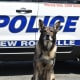New Rochelle Police Department K-9 Chase Heads Into Retirement