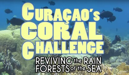 Pace Student's Coral Reef Documentary Garners Rave Reviews