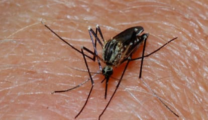 Scarsdale Residents Get Tips To Fight West Nile Virus