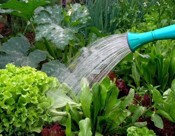 tanaman organik - Tips Keuntungan dengan Bisnis Sayuran Organik