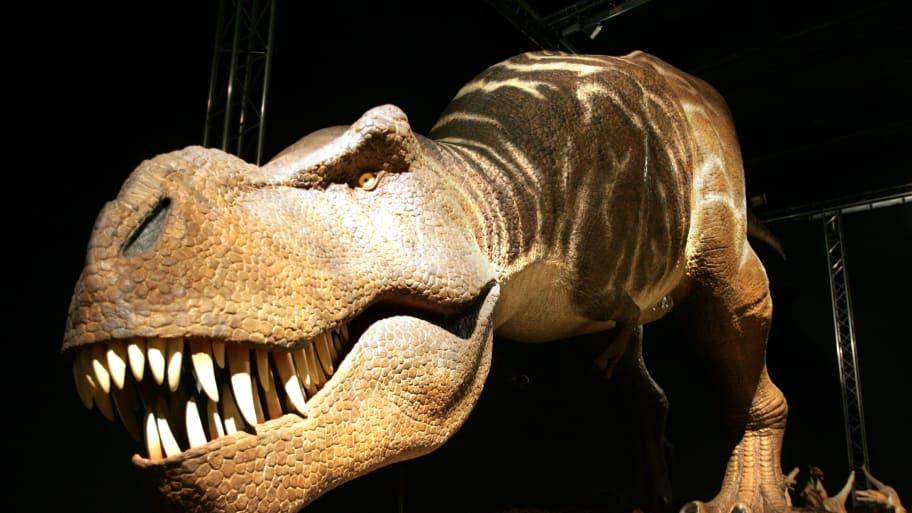 ebay baby trex t rex tyrannosaurus rex son of sampson alan detrich paleontology