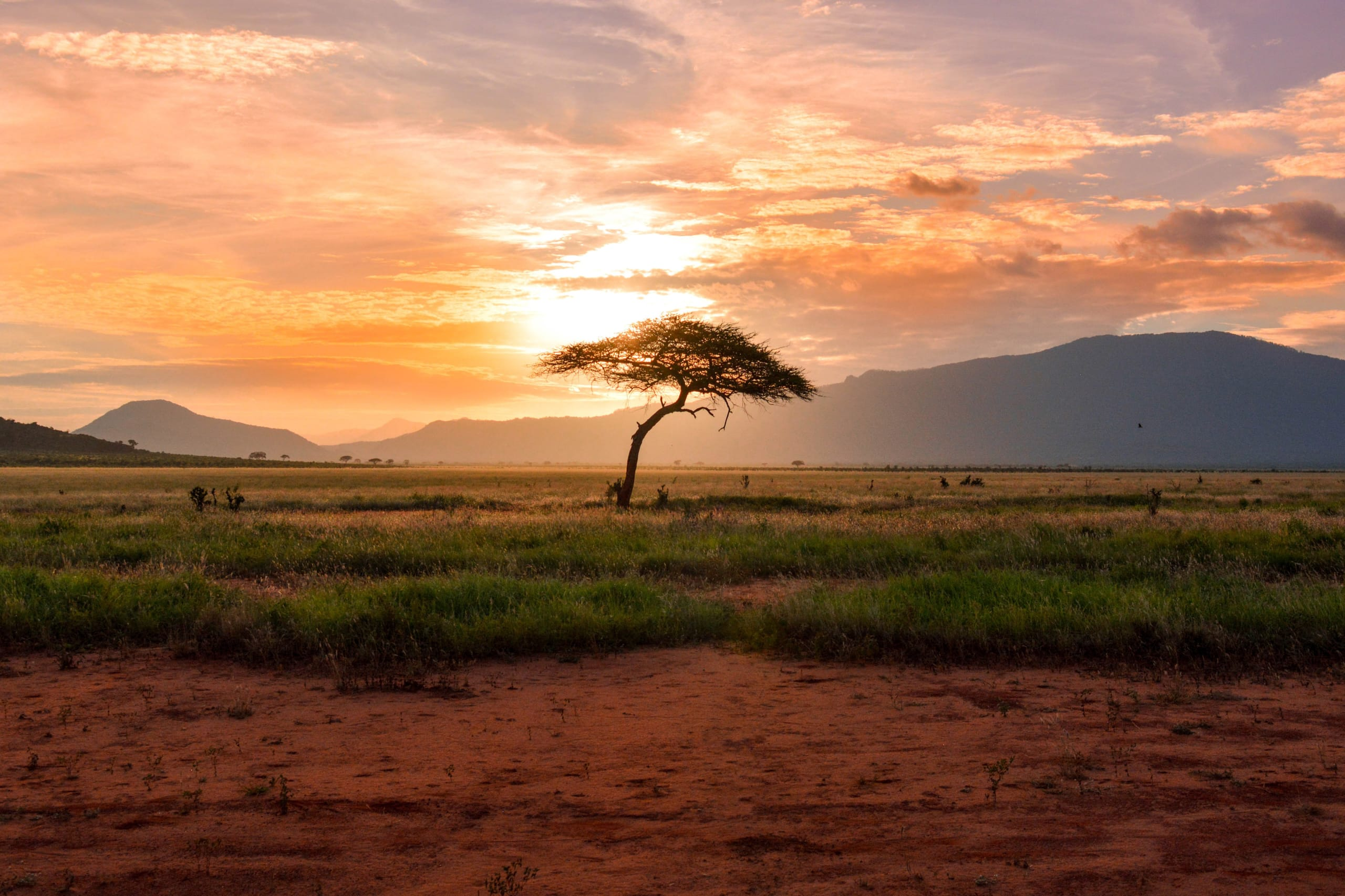 Lone tree in the Serengeti in front of a sunset behind mountain range.