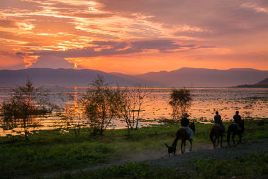 Horses along the lake.