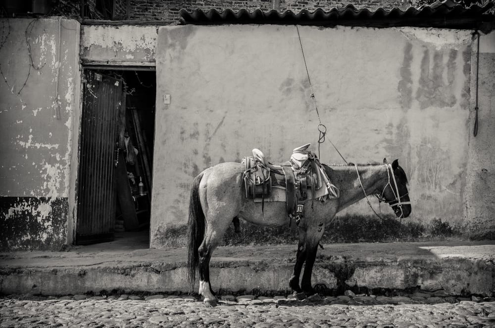 A horse stands tied up outside the home of a man named Pequeño, Encarnación Rosas Street, Ajijic, Jalisco, Mexico