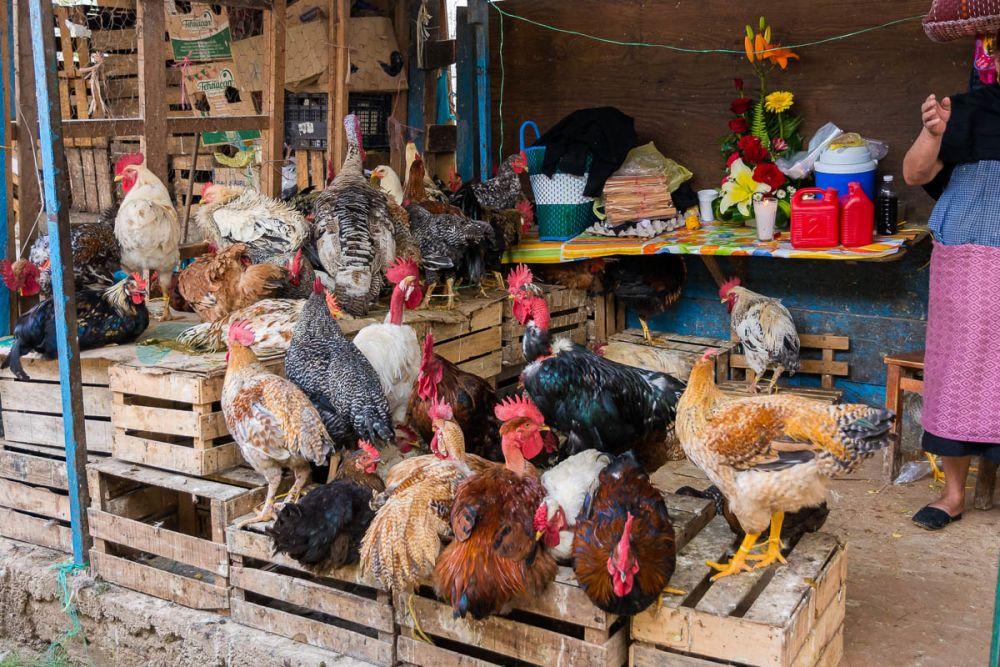 Chickens for sale in an outdoor market in San Cristóbal de las Casas, Chiapas, Mexico