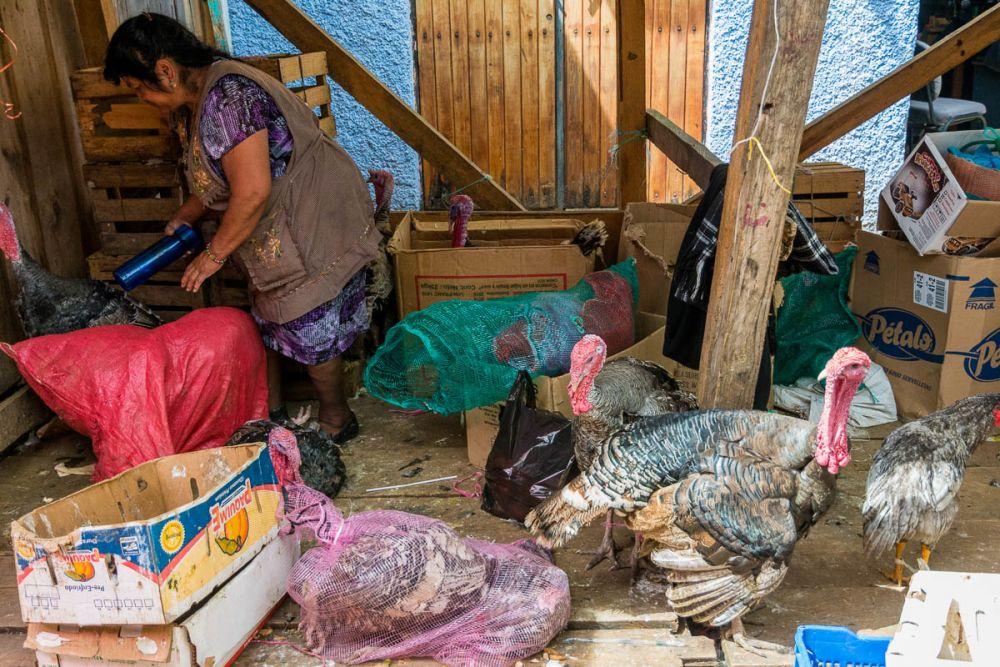 Turkeys in an outdoor market in San Cristóbal de las Casas, Chiapas