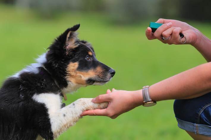 Dog Trainer Team Member photo