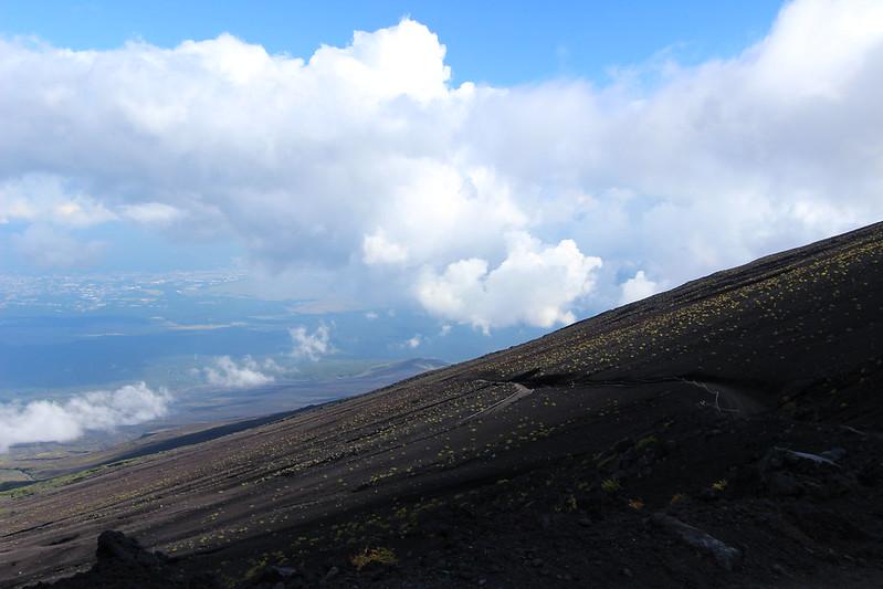 富士登山 下山 お花エリア