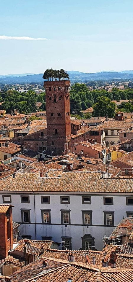view from guinigi towers in Lucca