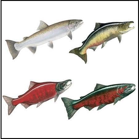 CANADA SPEAR FISHING