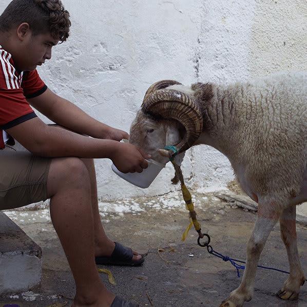 "Karim Sayad – ""Of Sheep and Men"" – Episode 332"
