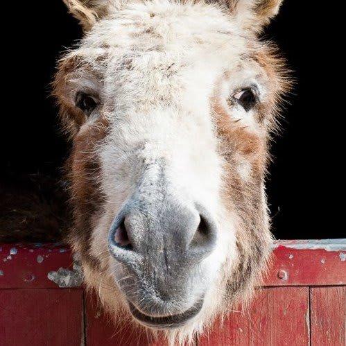 "David Redmon and Ashley Sabin – ""Do Donkeys Act"" – Episode 343"