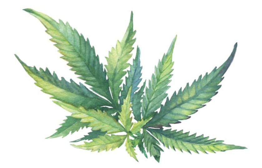 Sativex a Epidiolex, léky obsahující přírodní kanabinoidy
