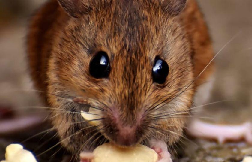 Kanabigerol (CBG) je nový, dobře tolerovaný stimulátor chuti k jídlu u předem nasycených krys