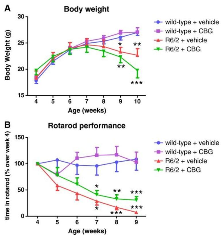CBG a Huntingtonova choroba - změny u myší R6/2