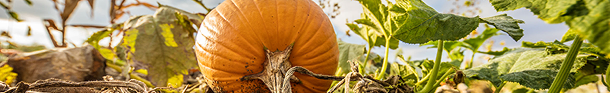 Pumpkin on a farm, Country Financial - Even the biggest goals start with simple steps
