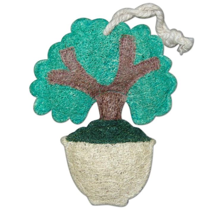Bonsai Loofah