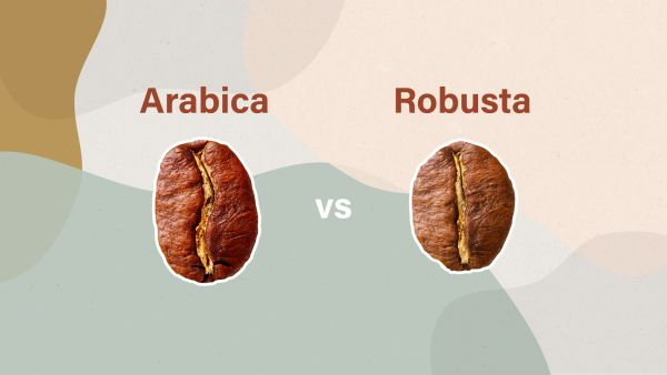 arabica-vs-robusta