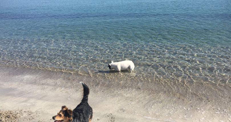 Spiaggia per gli amici a quattro zampe