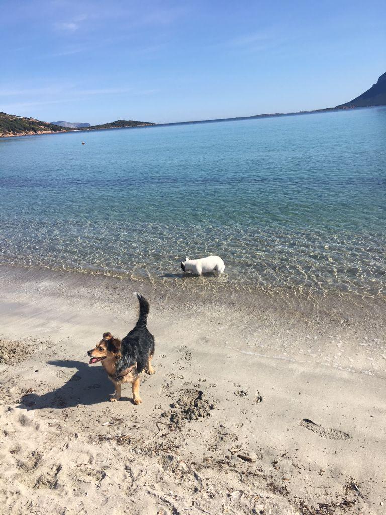 I nostri amici a quattro zampe con noi in spiaggia