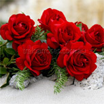 Gallipoli Roses