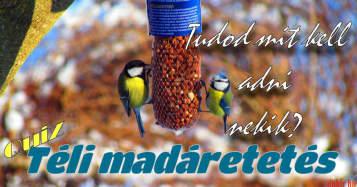 Hogyan etessük helyesen a madarakat?