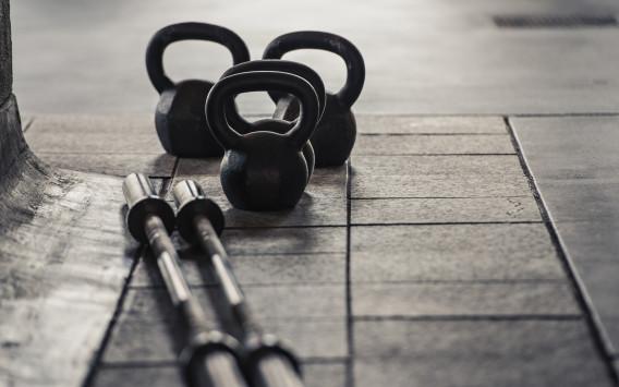 Bonobo Gym