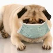 Allergy Management