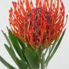 Pincushion red 300x300