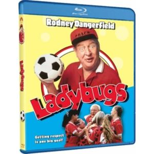Lady bugs 1607297774
