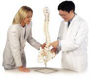Classic Flexible Spine Model