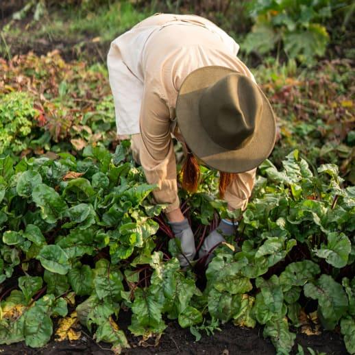 Wie mir gärtnern gegen den Pandemie-Frust half