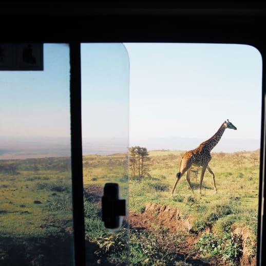Wie ist es eigentlich, alles hinter sich zu lassen, um Safari-Guide zu werden?