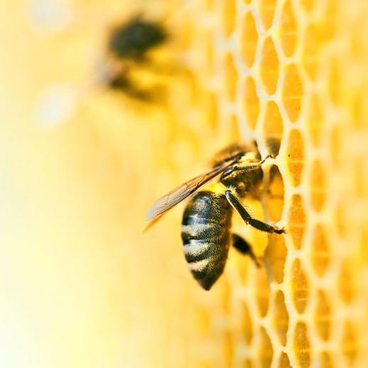 World Bee Day: Diese Beauty-Firmen setzen sich für Bienen ein