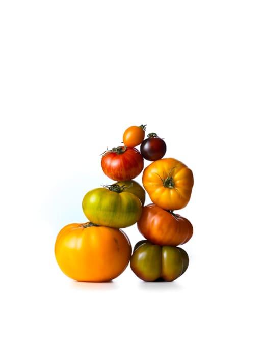 Tomaten: Neue Züchtungen und klassische Sorten