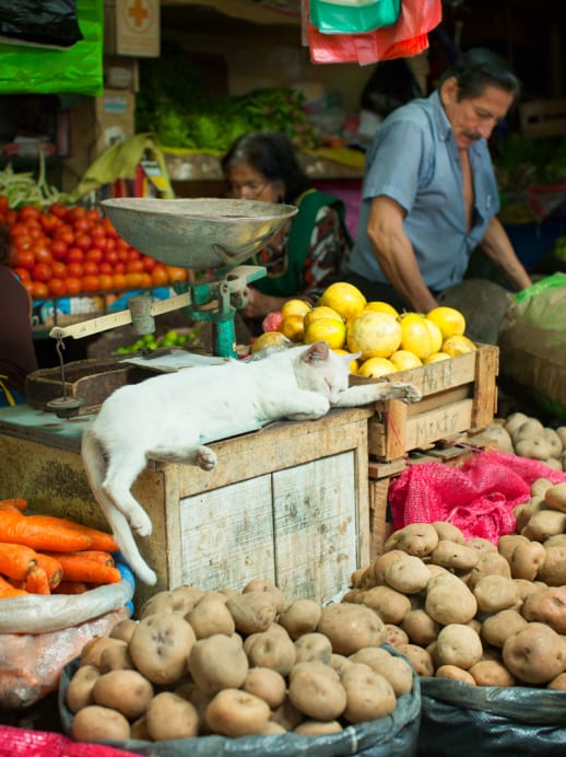 Lima schmeckt prima: Die peruanische Hauptstadt als neue Food-Trendmetropole