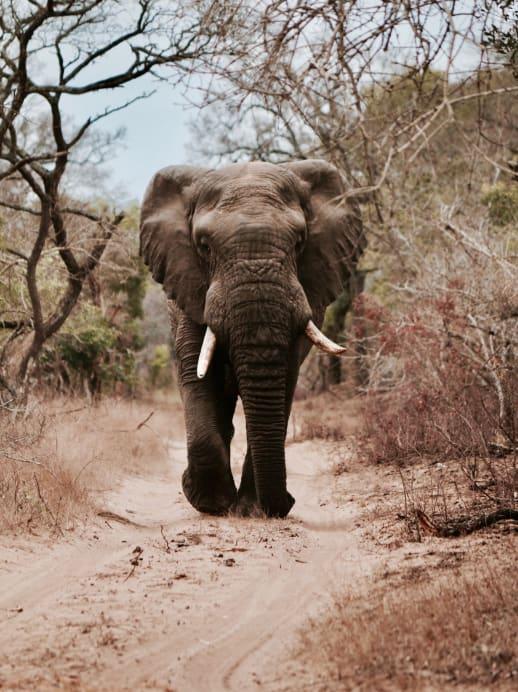 Die Elefanten machens vor