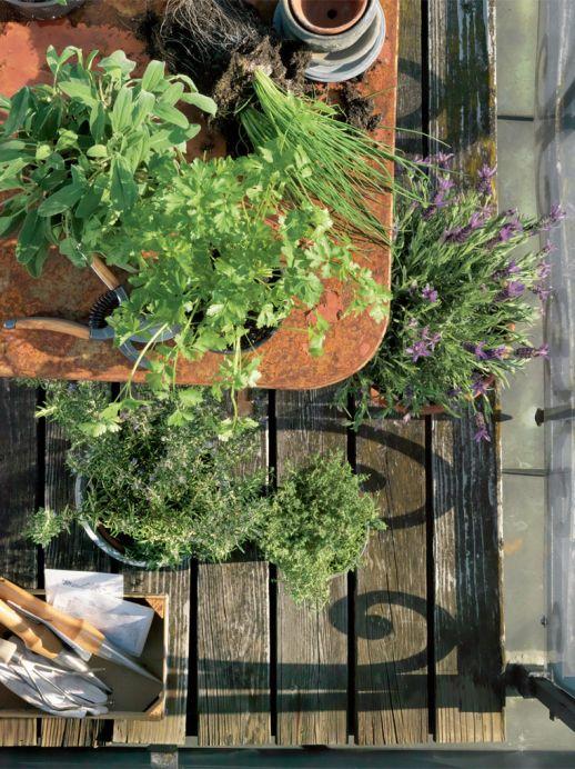 Tipps für den Balkon-Kräutergarten