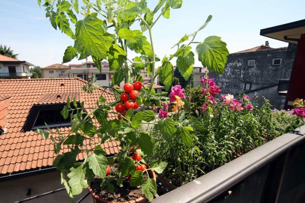 Pflanzen für Anfängerinnen