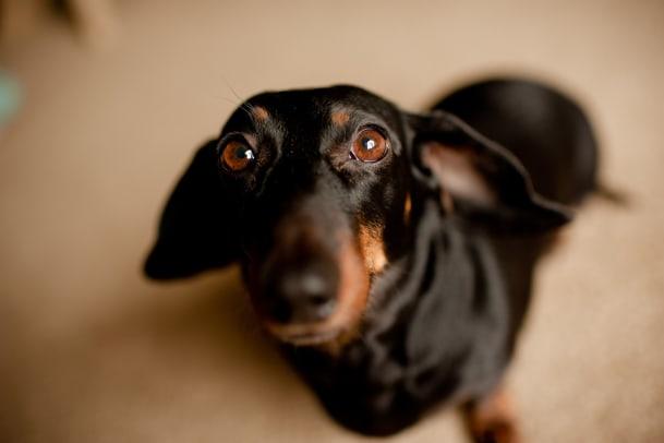 Geheimwaffe Hundeblick