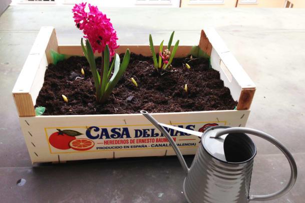 Früher Obst, jetzt Pflanzen: Blumenkiste basteln für den Balkon