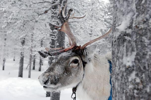 Eine Reise nach Lappland: The Iglu Has Landed