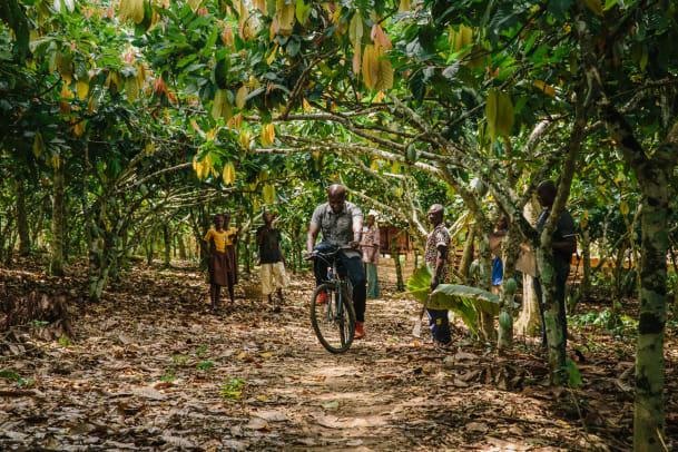 Dem Kakao in Ghana auf der Spur
